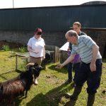 Laurelview Equestrian Centre